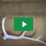 Geweihe leicht gemacht aus Worbla's<sup>®</sup> KobraCast Art / Making of light-weighted antlers made from Worbla's KobraCast<sup>®</sup> Art – Naruvien Art&Design 2